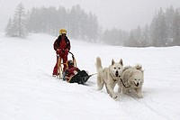 Huskie Husky dogs_sledding in Queyras Southern Alps, France.