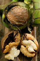 WALNUT Walnut embedded in its pericarp green fleshy envelope. The pericarp of the walnut is used in the fabrication of the ´Green walnut shell´, used ...