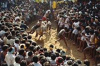 Bull taming , Jallikattu , Tamil Nadu , India