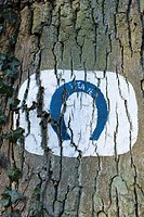 Tree trunk with horseshoe shape painted on it