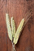 Three cereal ears rye and barley on wooden background (thumbnail)