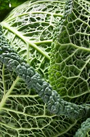 Savoy cabbage close_up