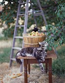 Cat in apricot orchard