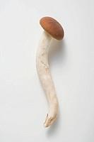 A pioppini mushroom Italy
