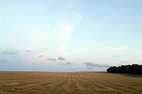 Evening landscape of field after harvesting. Österlen Sweden.