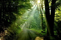 Summer sunlight seems to signal that eternity lies just around the bend of a dirt road, New Jersey, USA