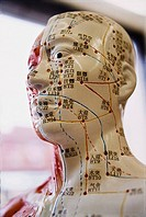 Mannequin showing Acupuncture Points