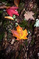 Algonquin Park, Ontario, Fall