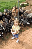 Girl feed for goats
