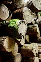 Logs, Belate, Baztan Valley, Navarra, Spain