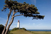 Tree in front of Dornbusch Lighthouse, Hiddensee Island, Baltic Sea, Mecklenburg-Western Pomerania, Germany, Europe