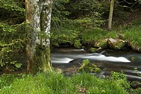 Flowing water and stream landscape, Eyach Valley, Northern Black Forest, Baden_Wuerttemberg, Germany, Europe