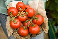 Woman holding fresh tomatoes