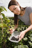 Woman picking blackcurrants