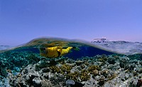 Scuba diving in the Red Sea, Egypt, Africa