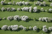 Fruit trees in bloom near Lendorf, aerial view, Drautal Valley, Carinthia, Austria, Europe