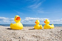 Rubber ducks on the beach, Baltic coast, Schleswig_Holstein, Germany, Europe