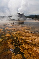 Castle Geyser in Upper Geyser Basin, Yellowstone National Park, Wyoming, USA