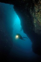 Diver in Northern Arch. Poor Knights Islands, New Zealand. South Pacific Ocean