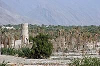 Oasis and watchtower, Hajar al Gharbi, Hajar mountains, Oman
