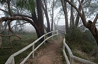 Path towards a hide for birdwatching betwen eucalyptus in Natural Park of Lagunas de la Mata y Torrevieja, Torrevieja, Alicante, Comunidad Valenciana,...
