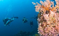 Similan Islands Underwater Park, Thailand, Southeast Asia, Scuba divers with video camera