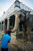Temple near Chennai. Tamil Nadu, India