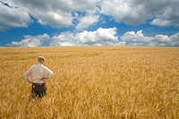 Farmer standing in barley field
