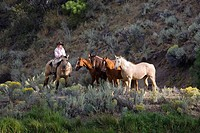 Cowgirl with horses, Oregon, USA
