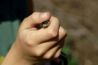 Grass Snake Natrix natrix peeking out of a child's hand