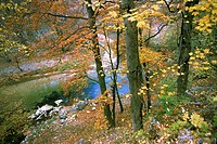 Rivulet in autumn forest