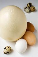 Ostrich eggs, chicken and quail