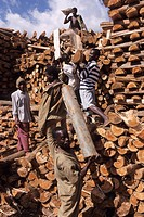 wood, mboma tea estate, thiolo, malawi, africa