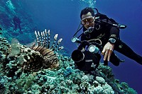Diver with underwater camera, Lion fish, Red Sea, Egypt