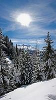 Switzerland, Europe, Schatzalp, Davos municipality, Canton Grisons, Graubunden, Grisons, Grisons, landscape, coniferou