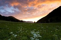 Switzerland, Europe, Binzberg, Canton Solothurn, Summer, Clouds, town, Gansbrunnen, Jura mountains, Meadow, Flowers, N