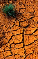 Cracks in red soil, Lausitz, Germany