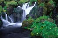 Iceland, Vik, waterfall, stones, mossy,