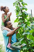 Father and Daughter Looking at Tall Bean Plant