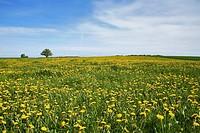 Meadow in Mecklenburg-Western Pomerania, Germany