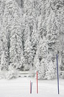 Ski poles and snow covered trees in winter
