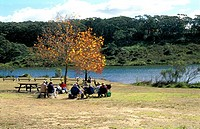 Picnic in Autumn (thumbnail)