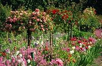 Monet´s garden, Giverny, Haute Normandie, France, Europe