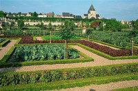 Herb and kitchen gardens, Chateau Villandry, Centre, France, Europe
