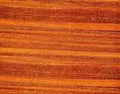 Photography of teak wood grain, Close Up