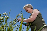 Low angle view of a senior woman cutting plants with hedge clippers