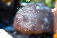 Close_up of a spider web, Sierra De Organos, Sombrerete, Zacatecas State, Mexico