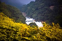 Waterfall in a forest, Waterfalls of the Monkeys, City Valleys, San Luis Potosi, Mexico