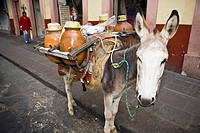 Donkey carrying jars on its back, Zacatecas State, Mexico