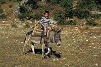 A local boy sitting on a wooden saddle riding a mule in the Vjosa valley in Albania, Europe